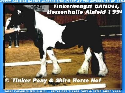 Heartily welcome on the Tinker pony & Shire Horse yard