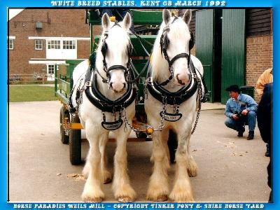 Shire Horse gelding KRAEMERS MUEHLE SUNSHINE, 194 photo of July of 2002 until October of 2004