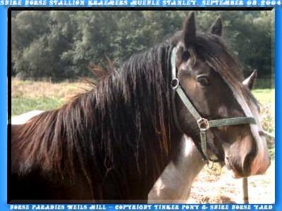 Shire Horse Hengst STANLEY, Slideshow mit 373 Photos von September 2002 bis September 2004