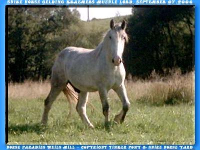 In der folgenden Slideshow können Sie, mit 251 Photos von Juli 2001 bis September 2004, den Shire Horse Wallach KRAEMERS MUEHLE LORD & seinen Vorfahren kennen lernen.