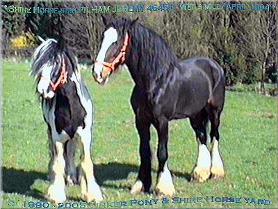 In der Slideshow können Sie sich, mit 28 Photos vom April 1994, ein Bild von dem wunderschönen, bayfarbenen Shire Horse Hengst Pilham Jeremy - Stud Book No 46456 machen.