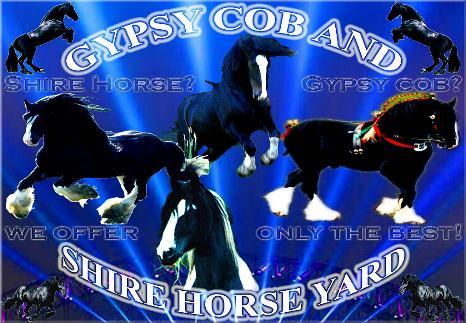 Mein dritter Shire Horse Zuchthengst, der sensationelle Shire Horse sire Sladbrook Select - Stud book no 46671, im Mai 1997 auf dem Rittergut in Lehrbach.