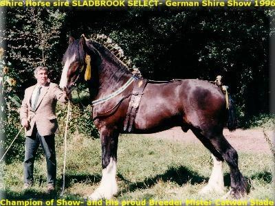 Shire Horse sire SLADBROOK SELECT, Slideshow with photos of June of 1986 until May of 2003