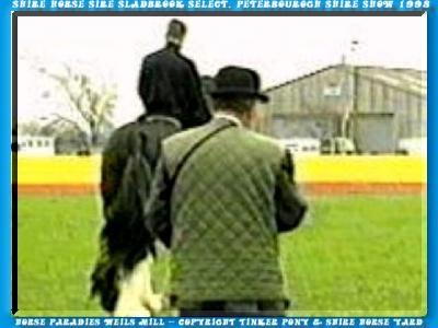 Sladbrook Select, 15. März 1998 in Petergourogh & Field Officer J. D. Ward