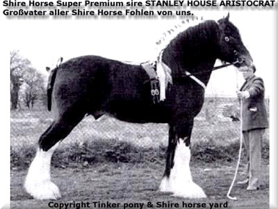 Heartily welcome into the Tinker pony & Shire Horse yard