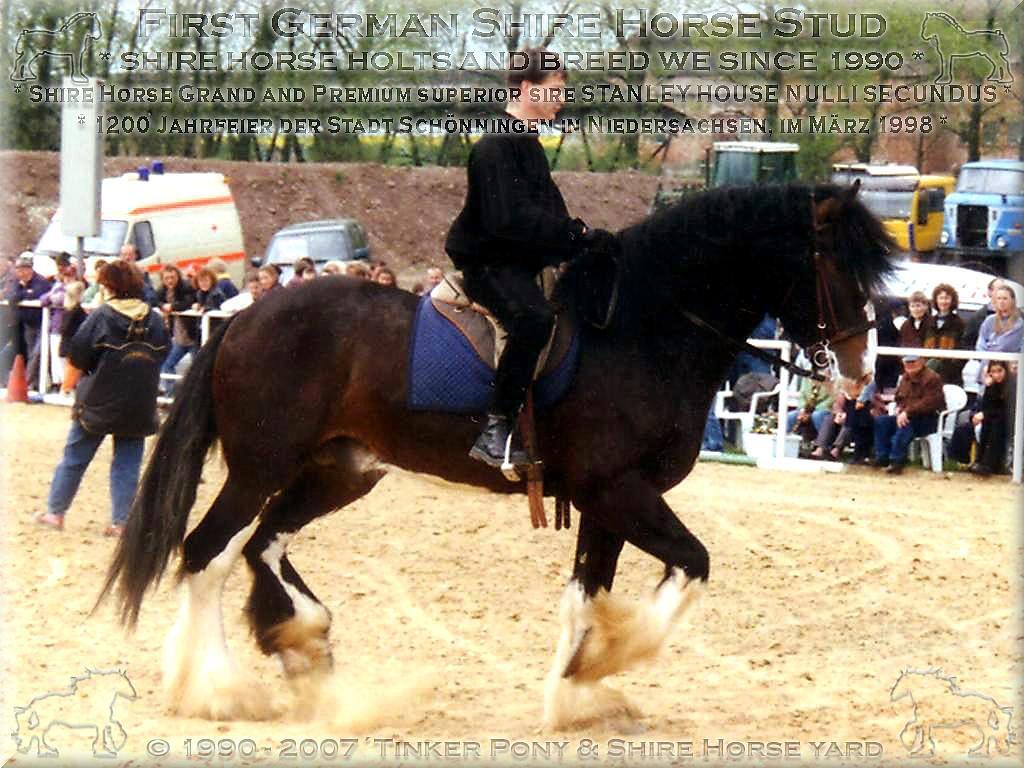Herzlich Willkommen auf dem Tinker Pony & Shire Horse Hof - Der <b>Shire Horse Zuchthengst</b> SLADBROOK SELECT kann - bei der noblen Fürsoge durch den <b>Deutschen Shire Horse Verein e.V.</b> - nur noch in die Luft gehen.