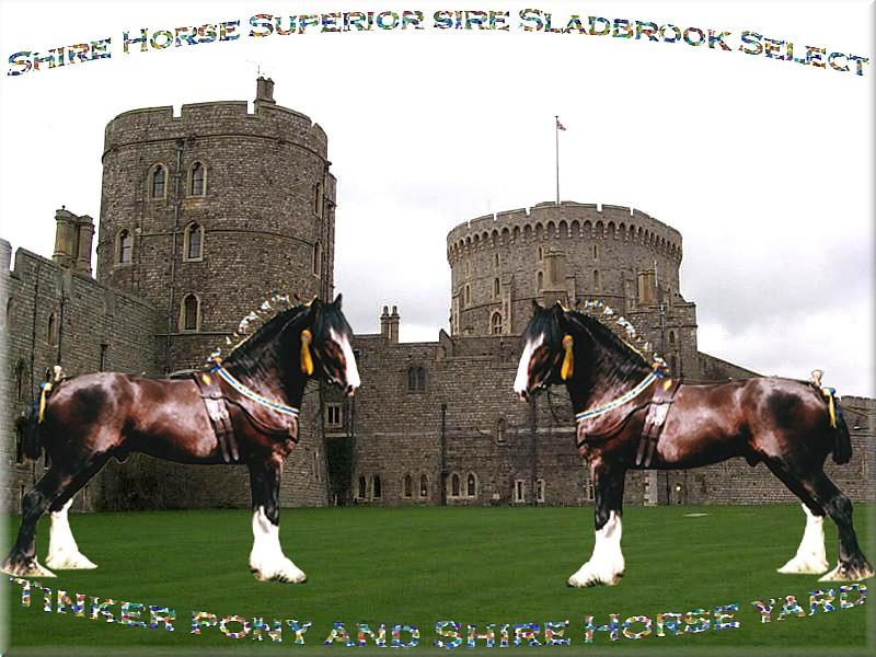 Herzlich Willkommen im Tinker Pony & Shire Horse Hof - Hallo Jutta - meine echten Shire Horse hast Du ja pefekt gekillt! - aber virtuell läuft meine Shire Horse Herde doch noch ganz gut?
