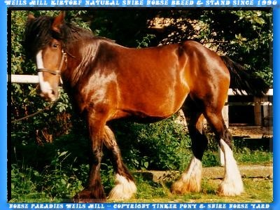 Tinker pony and Shire Horse yard, Slideshow with 505 photo of August of 1990 until August of 2004