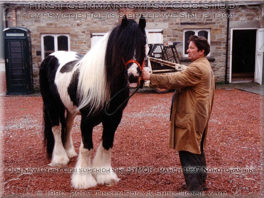 Gypsy Cob - irisch Tinker Zucht, Gypsy Cob - irisch Tinker Haltung, Gypsy Cob - irisch Tinker Verkauf seit 1994.